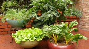 Container Vegetable Gardening @ Historic Oakland | Columbia | Maryland | United States