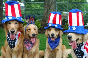 Bark in the Park @ Vantage Point Park   Columbia   Maryland   United States