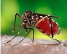 How to Combat Mosquitos Workshop and Information Session @ Slayton House   Columbia   Maryland   United States
